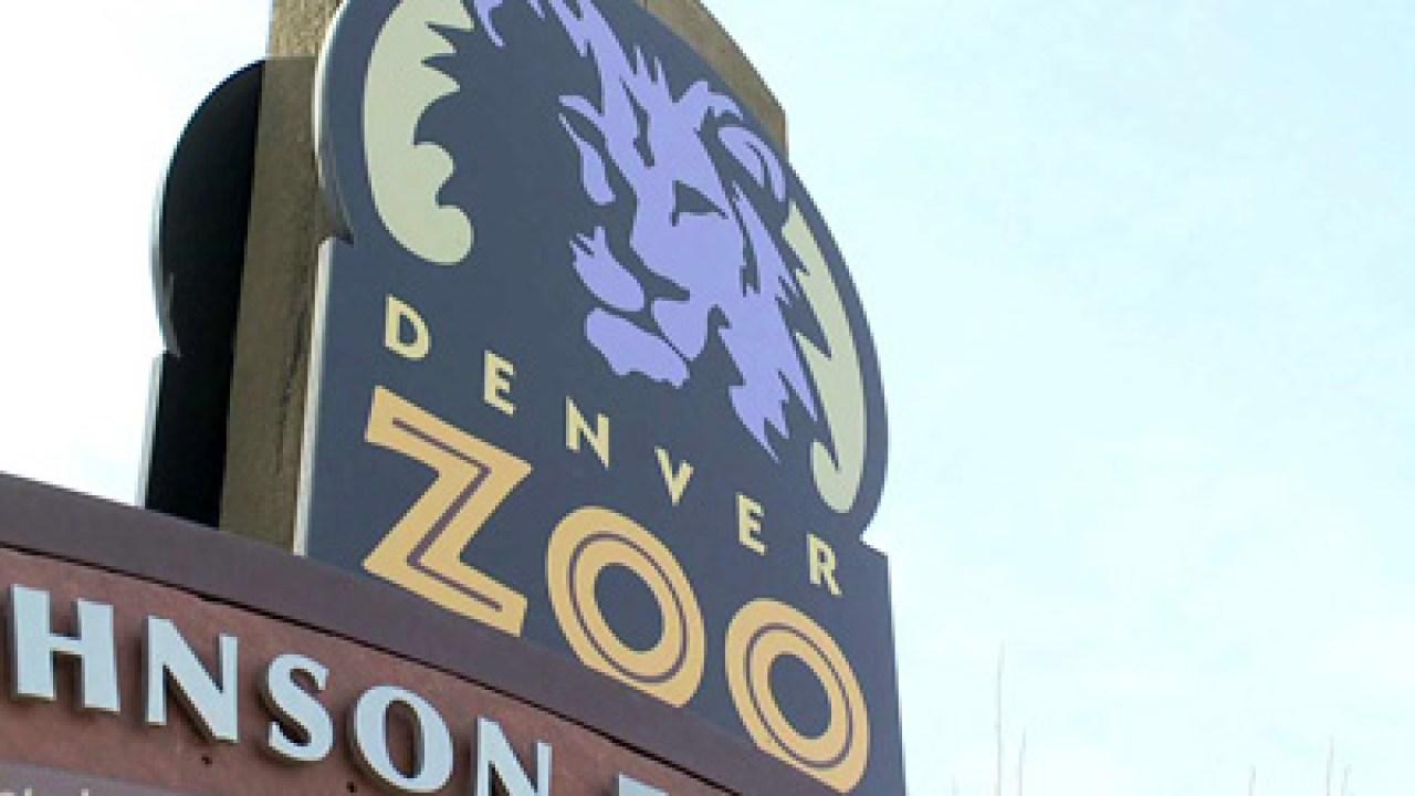 Kebun Binatang Denver membuat perubahan setelah harimau di kebun Binatang Bronx tes positif untuk COVID-19