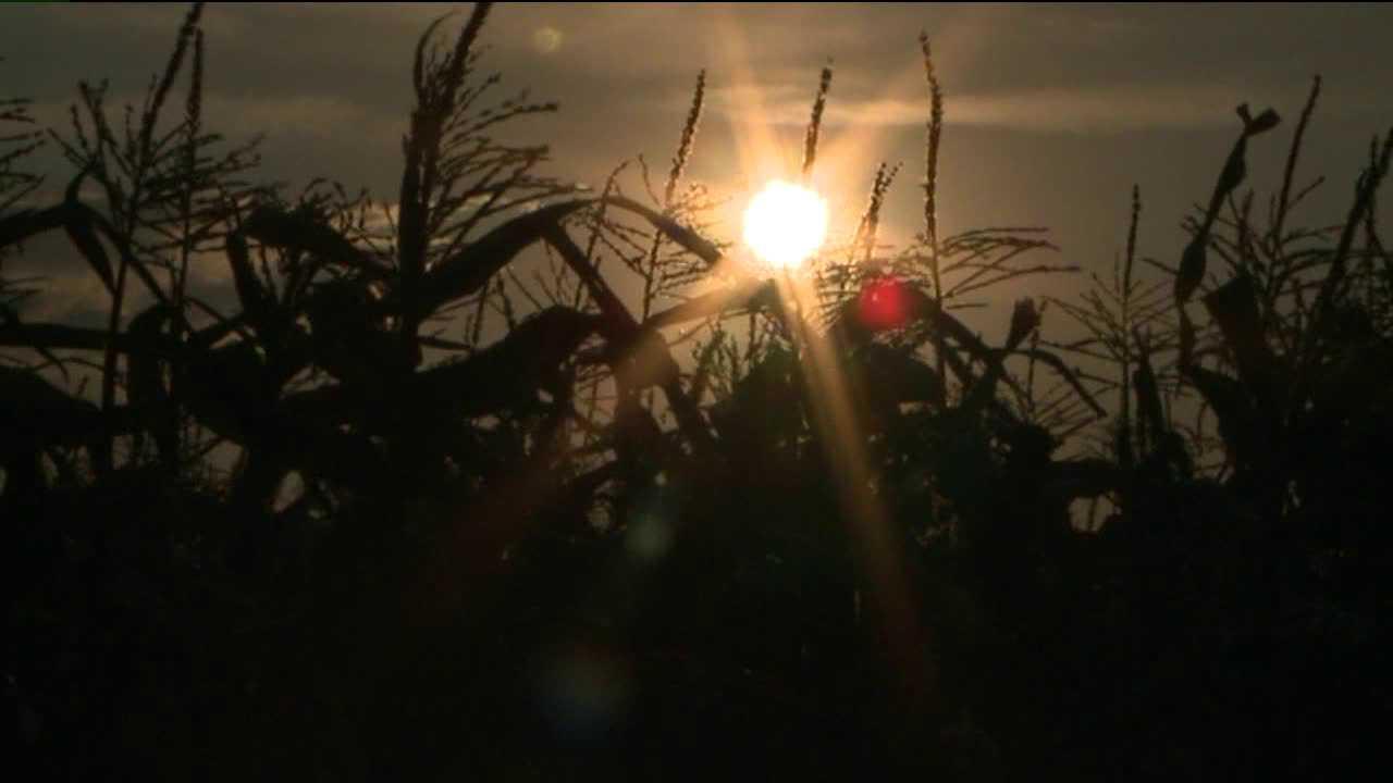 Drought hits Colorado farmers hard. LaSalle, Colo. July 3, 2012