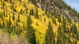 Fall colors along Guanella Pass Road on Sept. 16, 2012. (David Harpe)
