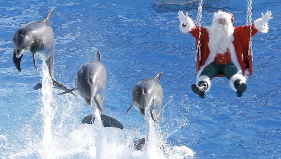 Santa auditions an alternative species to pull his sleigh at the Marineland park in Antibes, France, on Wednesday, December 19. (Photo: CNN)