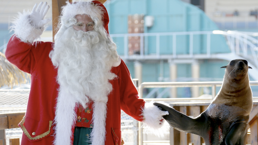 A man dressed in a Santa Claus costume poses with a sea lion at the animal exhibition park Marineland, in France, on December 19. (Photo: CNN)