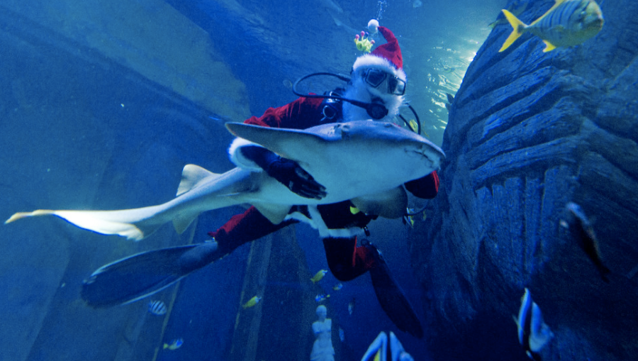 A diver dressed as a Santa Claus dives with a nurse shark in the Sea Life Aquarium in Munich, Germany, on December 6, which is St. Nicholas Day. (Photo: CNN)