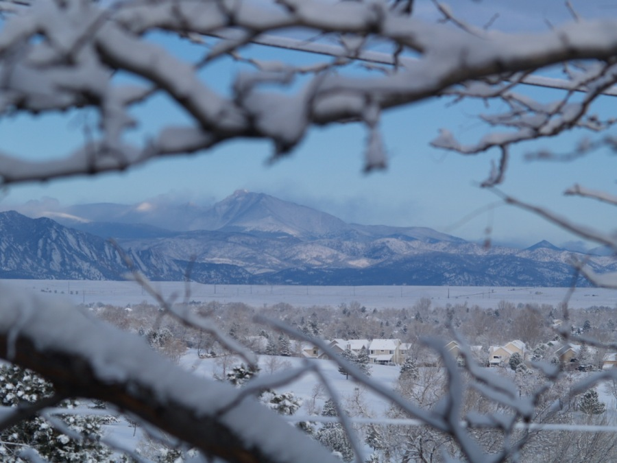 Snow through the trees in Arvada.