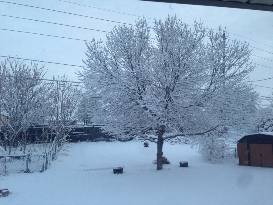 A winter wonderland in Northglenn.