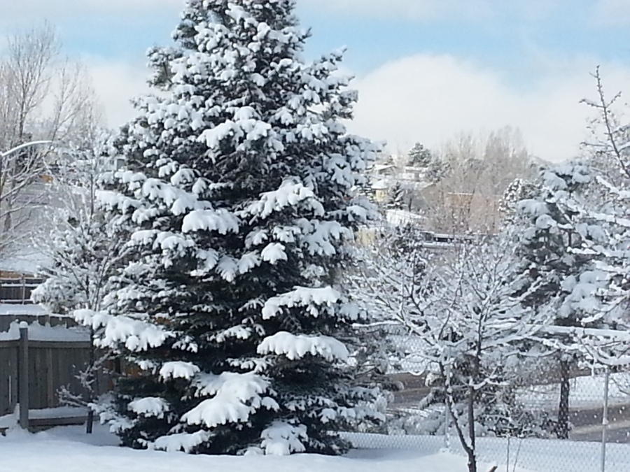 A home at Wadsworth and Ken Caryl in Littleton saw a good deal of snow.