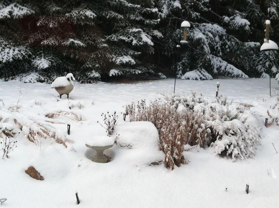 A shot from Wanda's backyard.