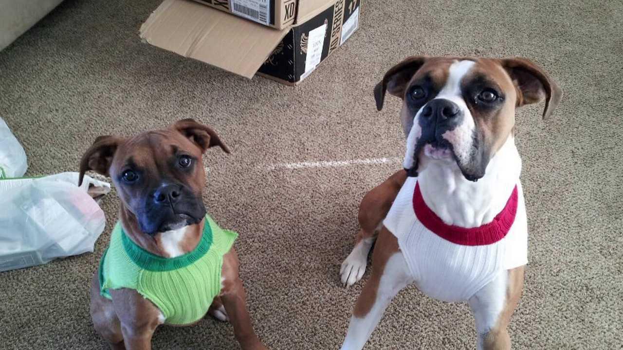 Family Finds Missing Dogs For Sale On Craigslist Fox31 Denver