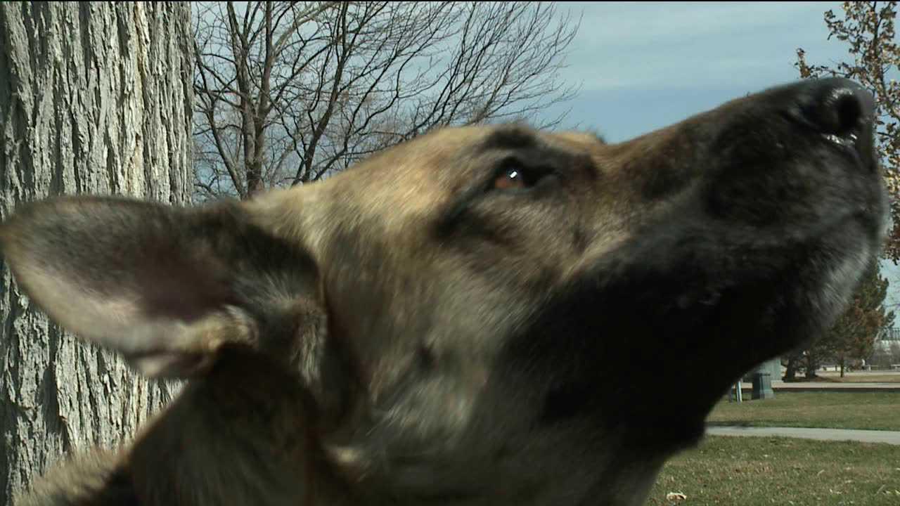 Drug-sniffing dog for hire