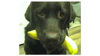 Wrigley, a 1-year-old Chocolate Lab, was shot and killed by an Iowa man on Christmas Eve, 2012. (Photo: WQAD)