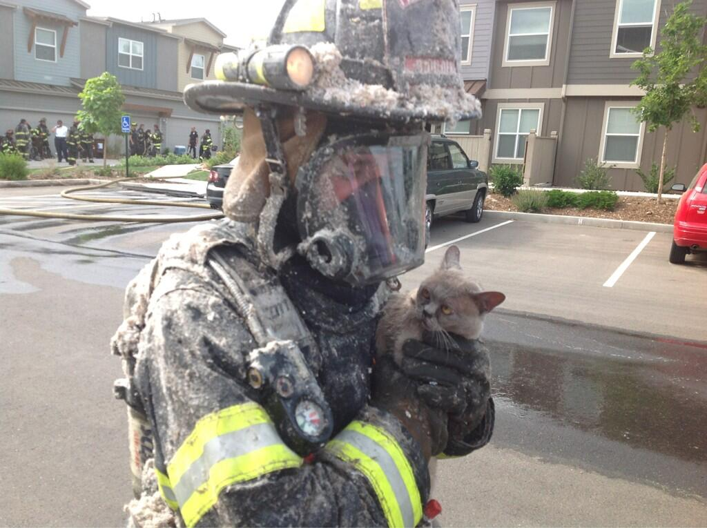Cat looks unsure about being saved.(Credit: Boulder Police)