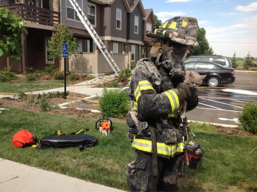 Cat appears ready to escape from firefighter.(Credit: Boulder Police)