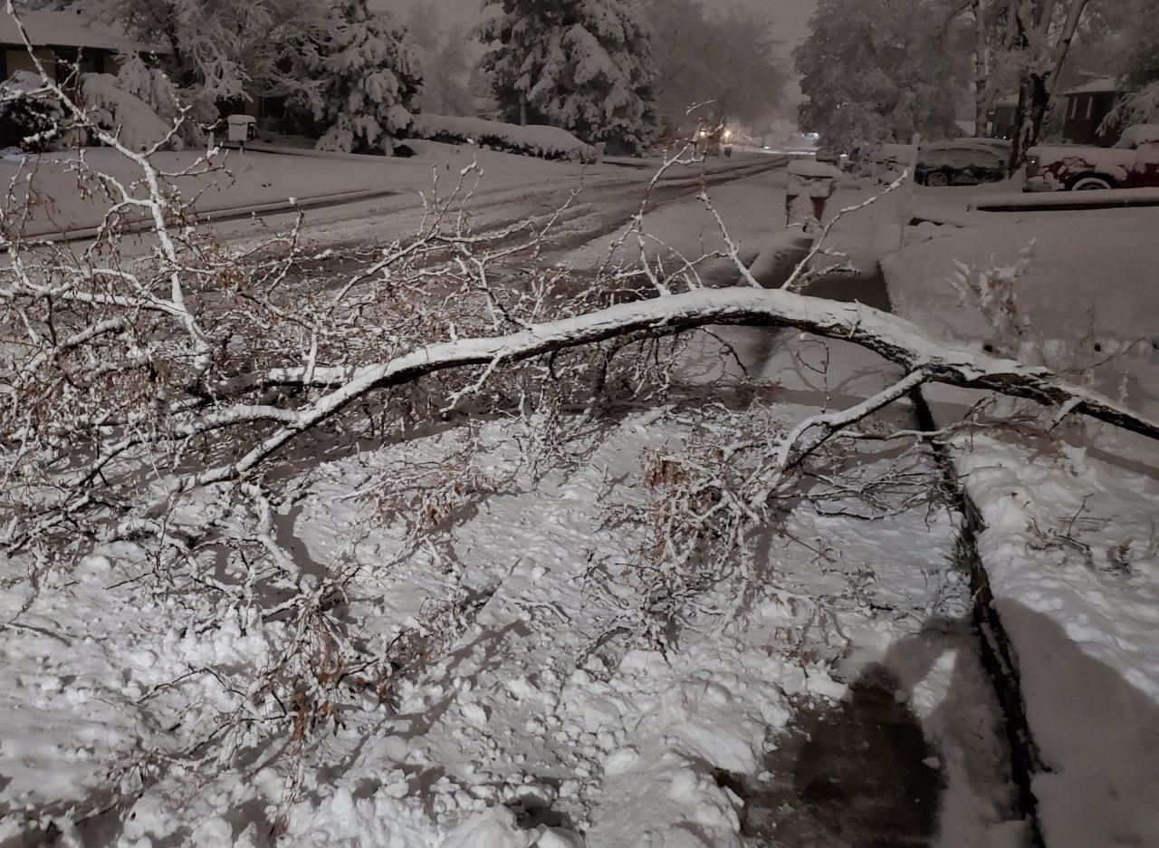 Hundreds of Denver trees damaged in spring snow storm
