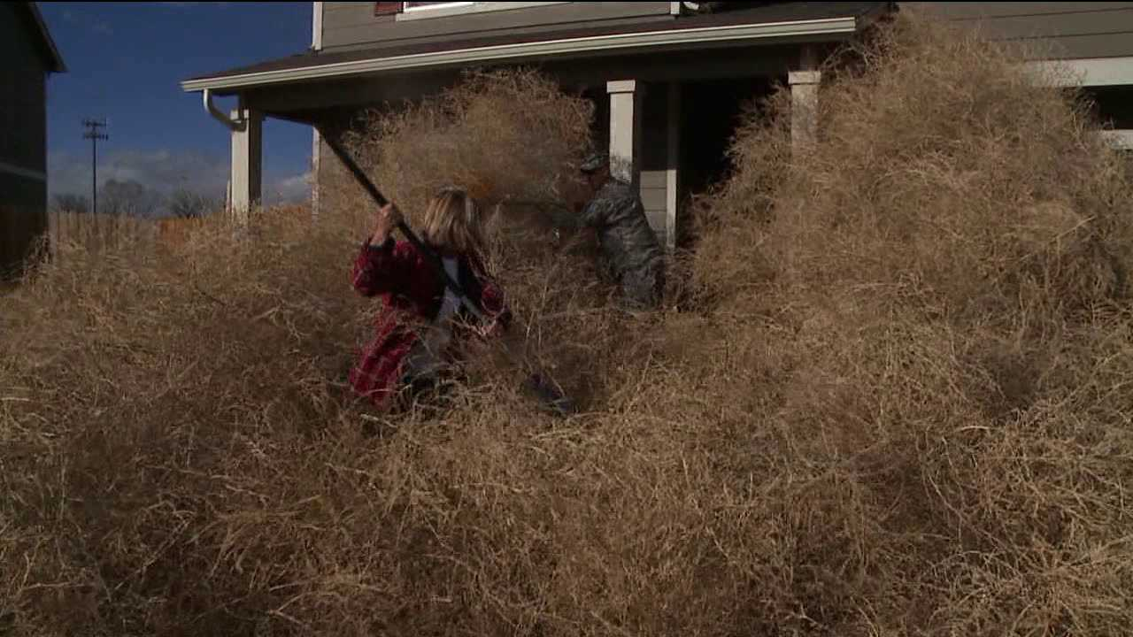 Winds stacked tumbleweeds against homes in Colorado Springs. March 18, 2014