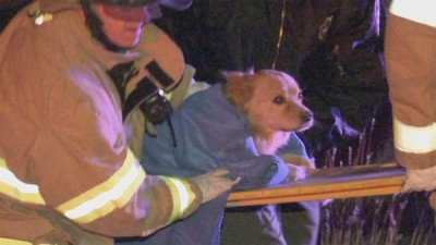 mergency workers care to Tango after the dog was critically injured in a rollover accident. Tango's former owner, Leonard Day, was charged with extreme cruelty to animals after the accident that left Tango critically injured. (Credit: KRQE / CNN)