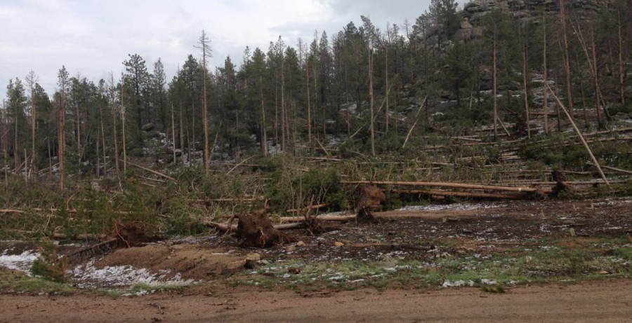 Trees blown down at Bellaire Lake Campground in Red Feather Lakes area of Larimer County, Colo. Photo cred: U.S. Forest Service