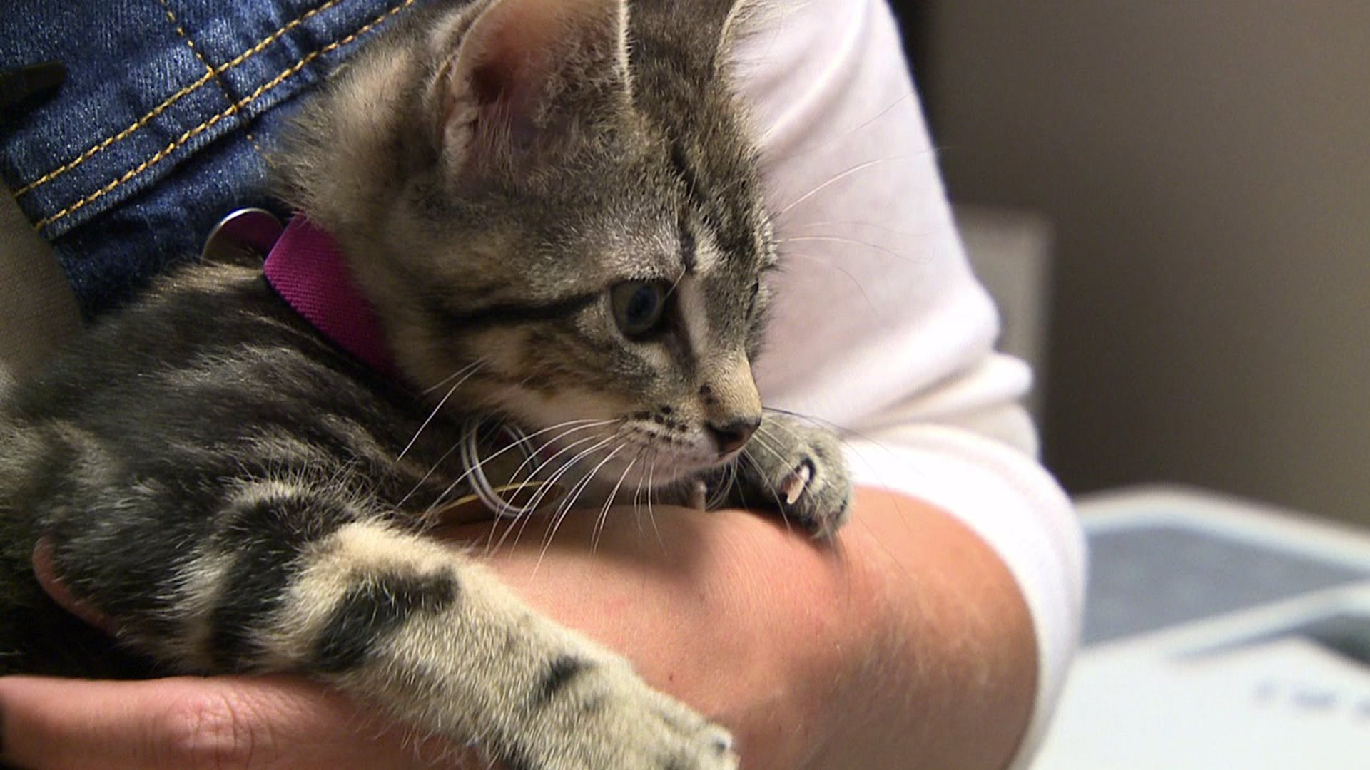 Kittens that survived being abandoned in the bitter cold ready for adoption