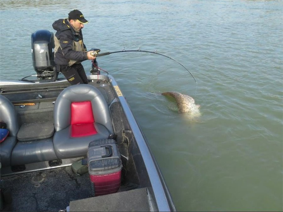 Dino Ferrari, catches a 127kg, 280 lbs, catfish in the Po River – a record setting catch with a spinning reel rod, according to Ferrari's sponsor, Sportex Italy.
