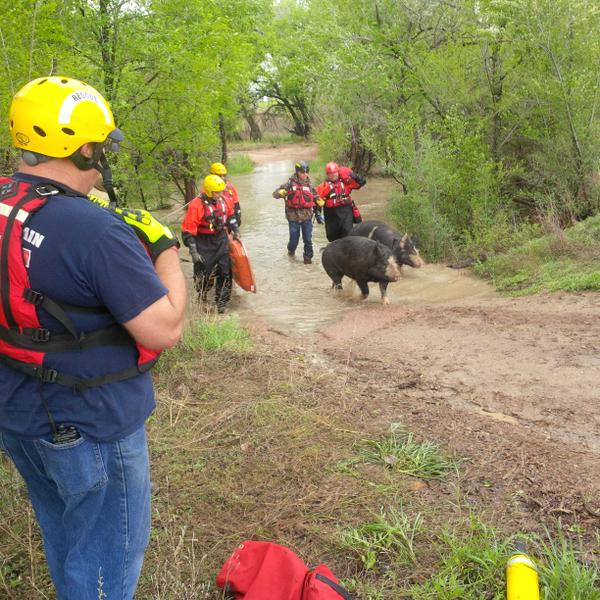 Members of the Fountain Fire Department rescued 2 horses, 3 turkeys, 2 dogs and 2 pigs from Fountain Creek.