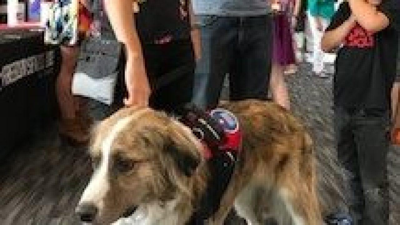 Lokal nirlaba membutuhkan dukungan menyusui layanan masa depan anjing