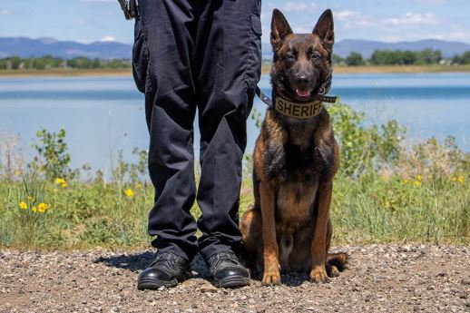 Tyr, a K9 with the Larimer County Sheriff's Office, will get a new vest thanks to a Fort Collins couple's donation. (Photo: Larimer County Sheriff's Office)