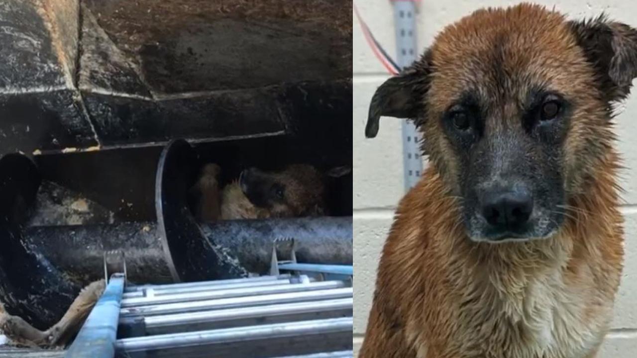 Σκύλος έσωσε από βαθιά μέσα Τενεσί κρέας εργοστάσιο επεξεργασίας λάκκο
