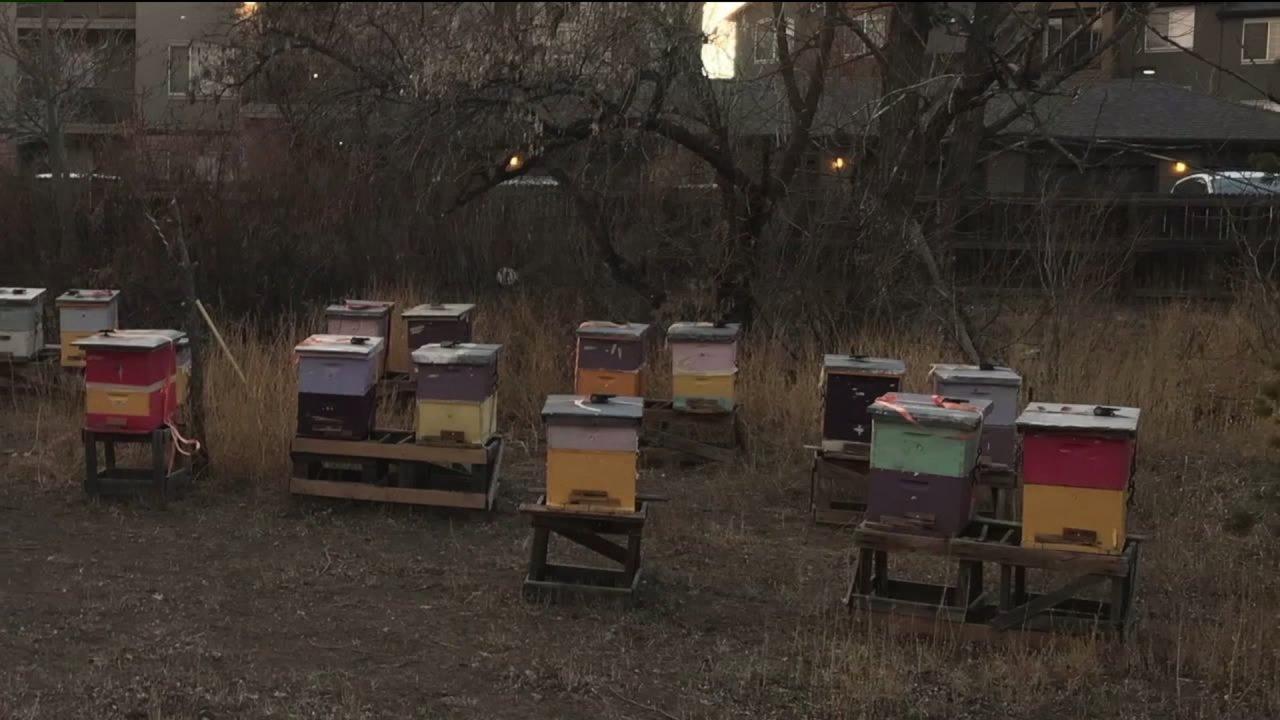 Northglenn PD: Bienenstöcke waren nicht gestohlen, es war 'Missverständnis' folgende Eigenschaft Verkauf