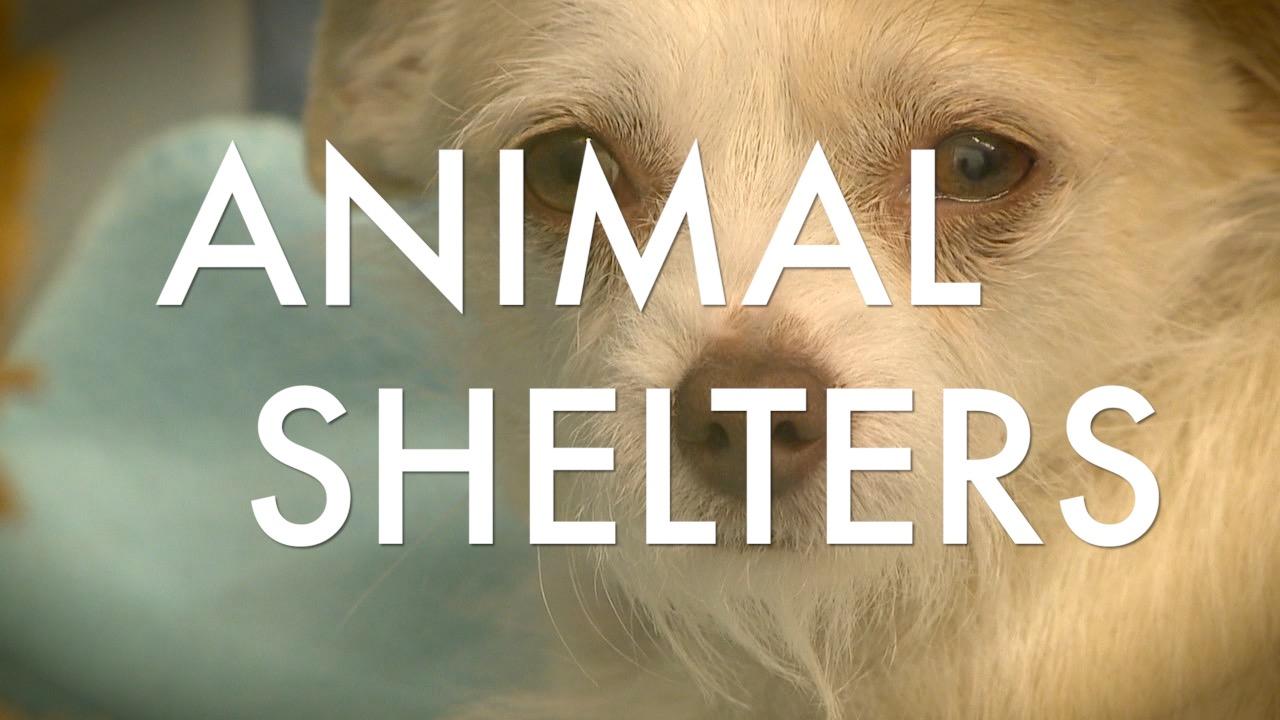 Tierheime suchen Geldspenden, die während der Pandemie