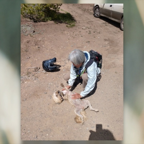 woman reunited with her lost dog