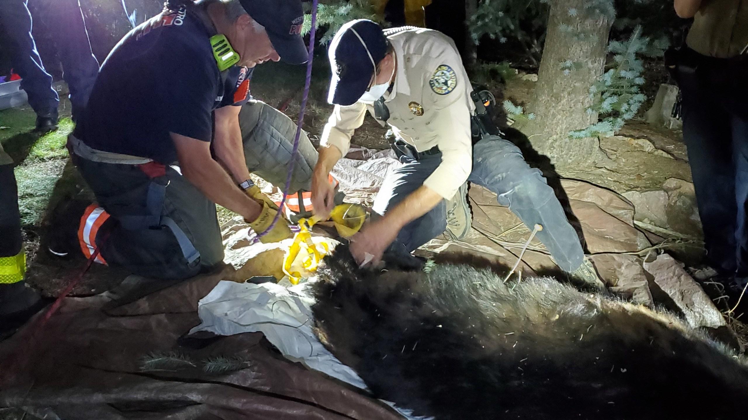 West Metro bear rescue