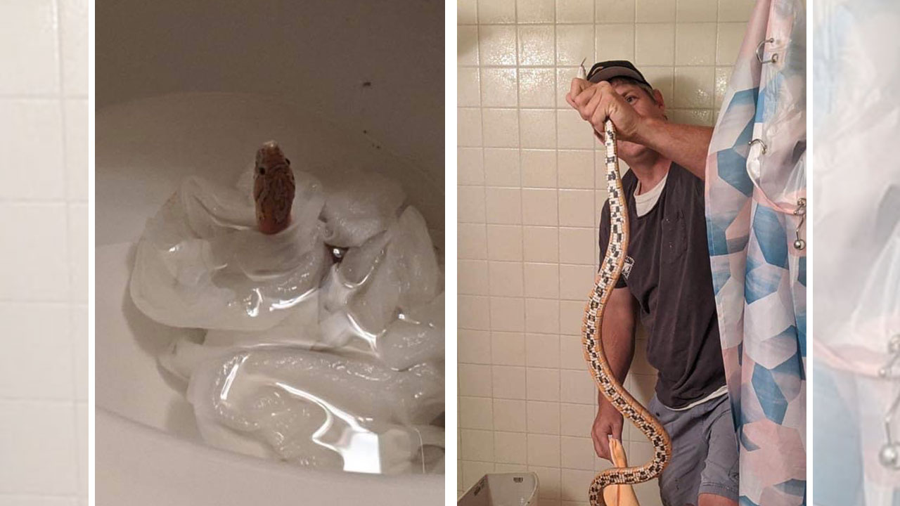 Miranda Stewart discovered a snake in her toilet
